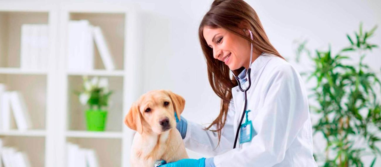 Qual valor para montar uma Clínica veterinária?