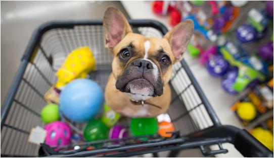 como um Sistema para pet shop pode ajudar