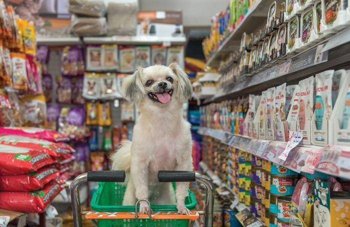 O que mais um programa para Pet Shop oferece?