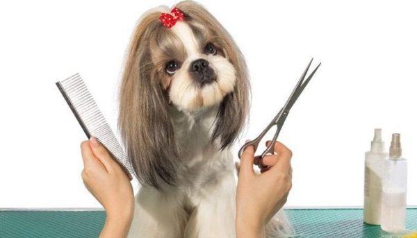 Como escolher um bom Programa para Pet Shop