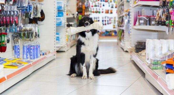 5 dicas básicas para aumentar o faturamento de seu Pet Shop