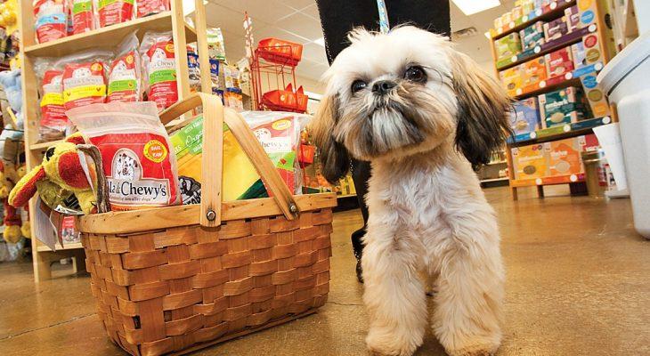 6 Dicas para abrir um Pet Shop de sucesso
