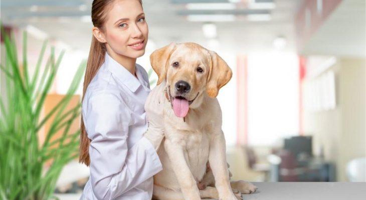 Como montar uma clínica veterinária com pouco dinheiro
