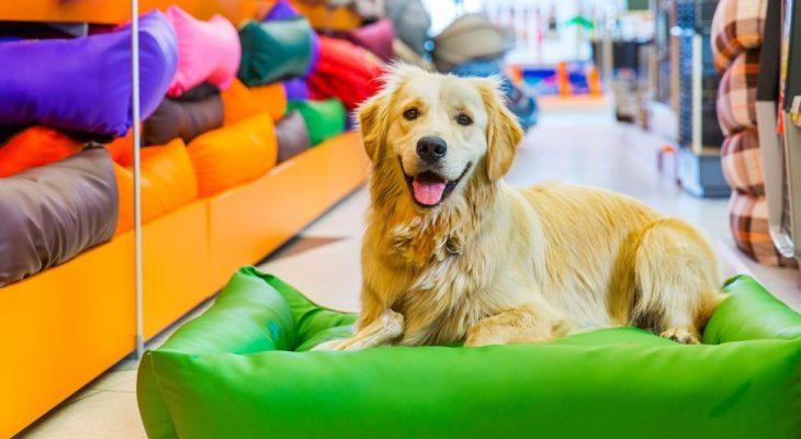 Como saber quais são os produtos mais vendidos no pet shop?