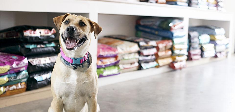 o que vender no seu pet shop