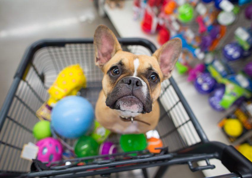 dicas do que vender no seu pet shop