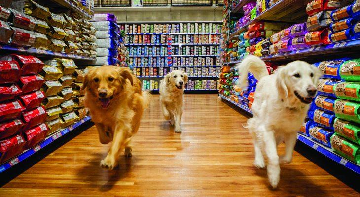 Confira como administrar um Pet Shop e ter sucesso