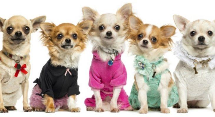 Dicas para abrir um pet Shop com pouco dinheiro