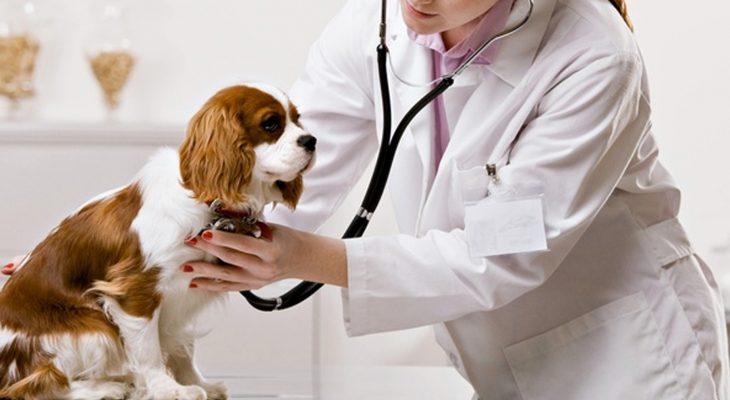 5 dicas para que sua clínica avance