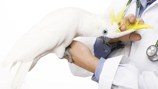 Dicas para ser uma clínica adequada a animais exóticos