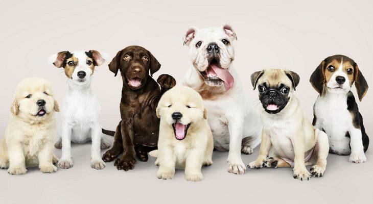 Mentiras e verdades sobre um software para Pet shop e Clínicas