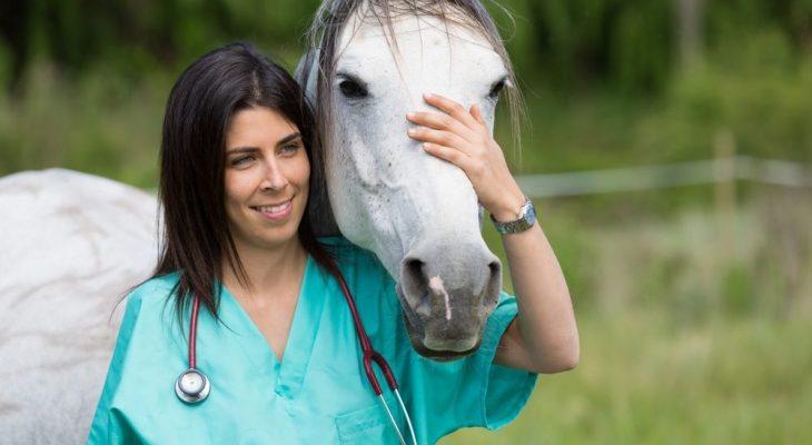 Como administrar uma clínica de animais de grande porte