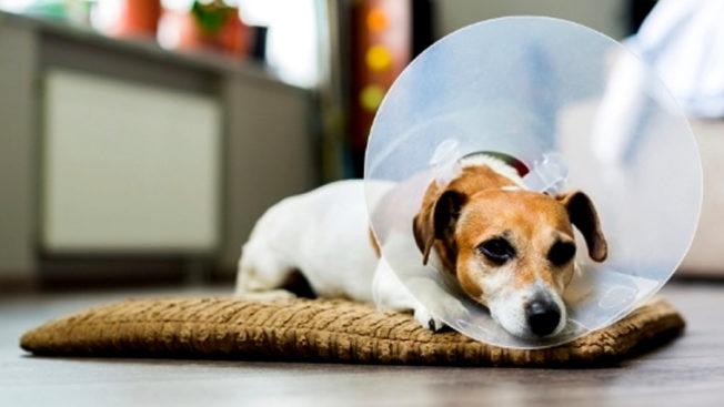 Que valor cobrar por uma castração canina?