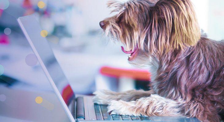 4 dicas infalíveis para administrar sua Clínica ou Pet Shop