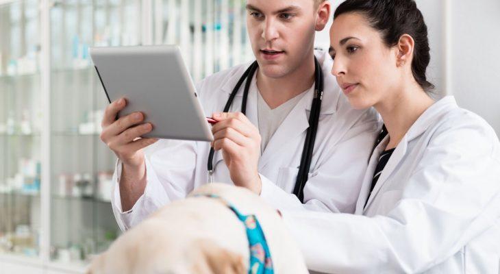 Dicas simples de Marketing para destacar sua clínica veterinária