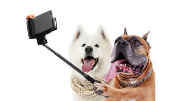 A importância das redes sociais para clínicas veterinárias