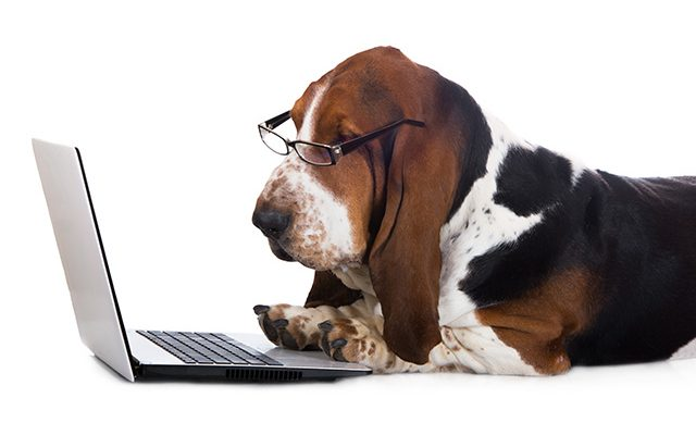 9 dicas para melhorar a gestão de seu Pet Shop