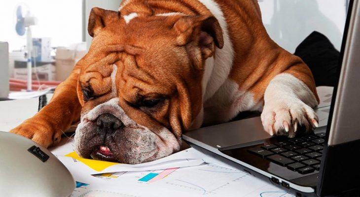 Como enfrentar os preços competitivos de Pet Shops maiores