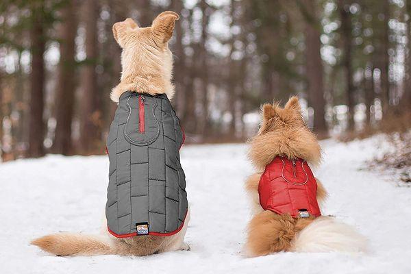 Dicas para seu Pet Shop faturar mais no inverno
