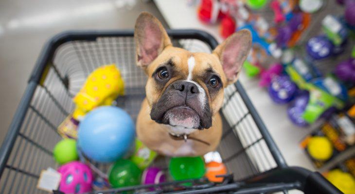 Dicas para organizar os produtos em seu pet shop