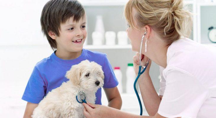 7 dicas para melhorar o atendimento de sua clínica veterinária
