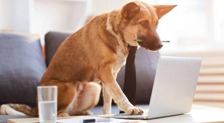 Como planejar as compras do seu Pet Shop