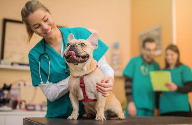 Saiba como fazer a gestão de pessoas em sua Clínica Veterinária ou Pet Shop