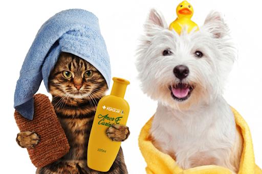 Vale a pena apostar em pacotes de serviços no meu pet shop?