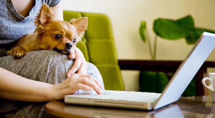 Como garantir um bom atendimento veterinário à distância