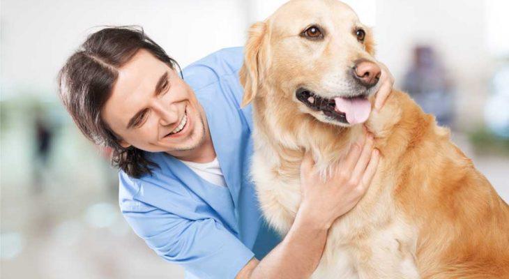 Como melhorar a gestão de cada setor de sua clínica veterinária